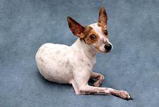Free Dog Portrait Royalty Free Stock Image - 6189386