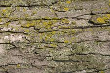 Free Tree Bark Texture Stock Photos - 6189933