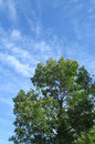 Free Green Tree And Blue Sky Royalty Free Stock Photography - 6191337