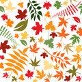 Free Autumn Leaves Stock Photo - 6193980