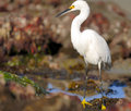 Free Ibis In Tide Pool Royalty Free Stock Images - 6196889