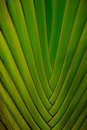 Free Palm Leaf Royalty Free Stock Photography - 6197027