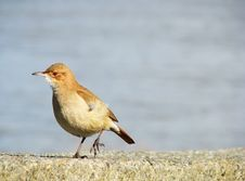 Free Bird Royalty Free Stock Photography - 6190007