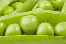 Free Fresh Pea Pods Stock Image - 6190041