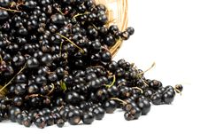 Free Blackcurrant Royalty Free Stock Images - 6190099