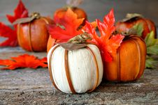 Free Pumpkins Royalty Free Stock Images - 6190379