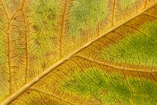 Free Withered Leaf Royalty Free Stock Photography - 6190407