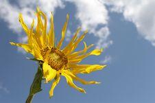 Free The Sunflower Stock Photo - 6190420