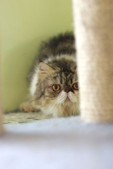 Free Cat Watching From Its Cote Stock Photography - 6190612