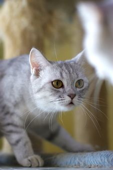 Free Cat Watching From Its Cote Royalty Free Stock Photo - 6190895
