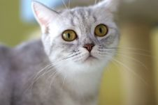 Free Cute Cat Stock Photography - 6190942