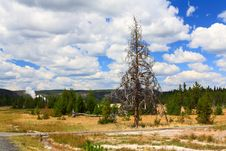 Free Upper Geyser Basin In Yellowstone Stock Images - 6191264
