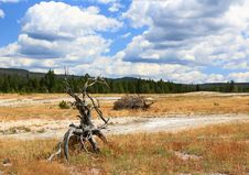 Free Upper Geyser Basin In Yellowstone Royalty Free Stock Images - 6191269