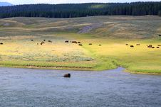 Free The Scenery Along The Yellowstone River Royalty Free Stock Image - 6191446