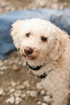 Adoption Dog Stock Image