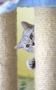 Free Cat Watching From Its Cote Stock Image - 6191571