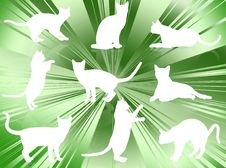 Free Cats Silhouettes Royalty Free Stock Photography - 6191597