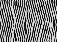 Free Zebra Royalty Free Stock Image - 6191606