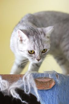 Free Cat Watching From Its Cote Royalty Free Stock Image - 6191966