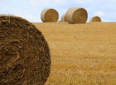 Free Hay Bales Royalty Free Stock Photo - 6192075