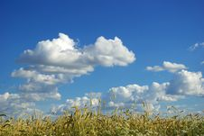 Free Wheat Field Royalty Free Stock Images - 6192599