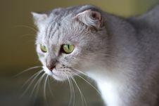 Free Cat Royalty Free Stock Photo - 6192615