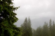 Free Fog In Zakopane Stock Photos - 6193693