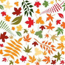 Free Autumn Leaves Stock Photo - 6193980