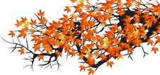 Free Autumn Leaves Royalty Free Stock Images - 6194009