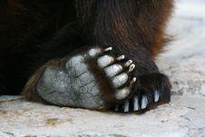 Free Brown Bear Stock Photos - 6196253