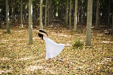 Free Dancer In The Forest Royalty Free Stock Image - 6196616