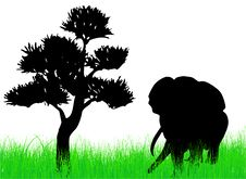 Free Elephant On The Grass Royalty Free Stock Image - 6196896