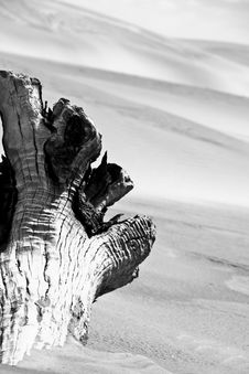Free Desert Tree Royalty Free Stock Photography - 6197737