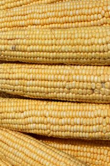 Free The Maize Royalty Free Stock Photography - 6197747