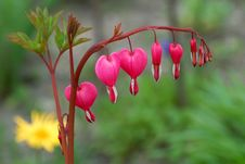 Free Heart-Shaped Flowers Royalty Free Stock Image - 6198346