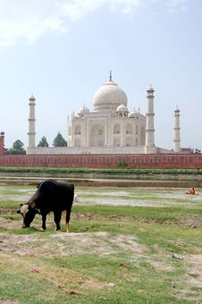 Free Taj Mahal Stock Photography - 6198352