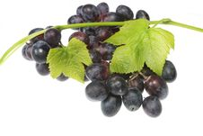 Free Grapes And Vine Royalty Free Stock Photography - 6198527