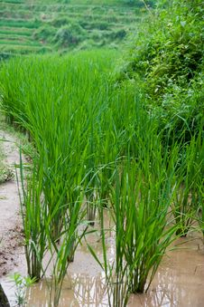 Free Guilin Rice Field Terrace Stock Photos - 6198663