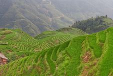 Free Guilin Rice Field Terrace Royalty Free Stock Photography - 6198757