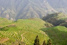 Free Guilin Rice Field Terrace Royalty Free Stock Photo - 6199195