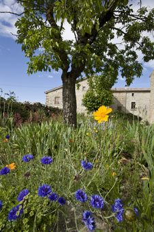 Free French Farm House Garden In Spring Royalty Free Stock Image - 6199446