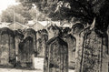 Free Cemetery At Maldives Royalty Free Stock Photography - 61935047