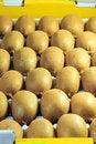 Free Kiwi Fruit Royalty Free Stock Photography - 61936137