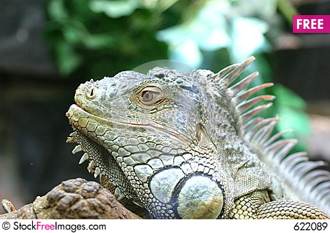 Free Water Dragon Head Royalty Free Stock Images - 622089