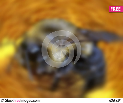 Free Bee In Motion Stock Image - 626491