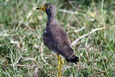 Free Bird Royalty Free Stock Photo - 620285