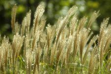 Free Meadow Grass Royalty Free Stock Photos - 620408
