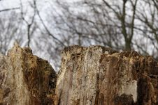 Free Brocken Tree Royalty Free Stock Photos - 620818