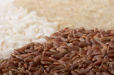 Free Close-up Of Rice (macro, Three Colors) Stock Photos - 620843