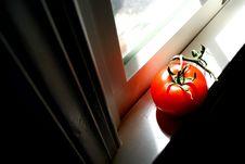 Free Tomato III Stock Photo - 620890